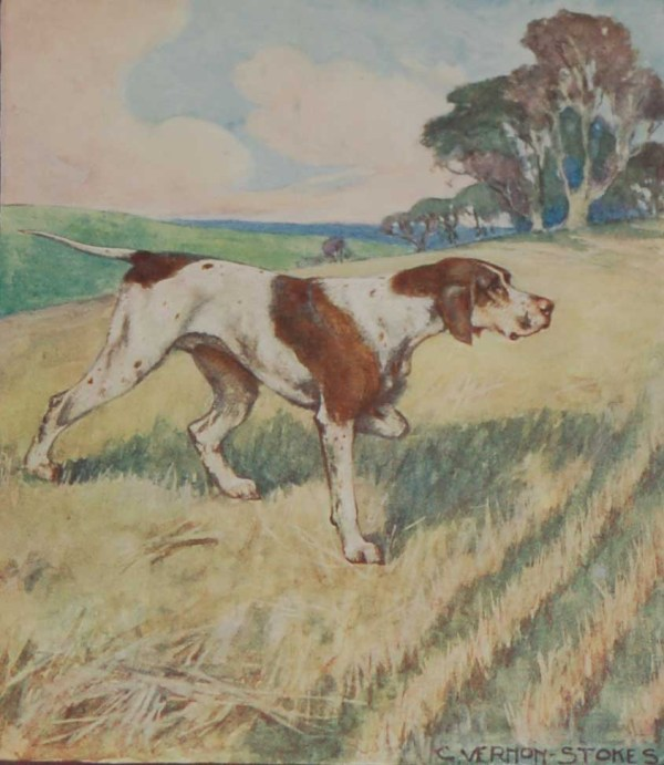 A 1909 Antique Print of a Pointer, print is in excellent condition with no foxing, by George Vernon Stokes.
