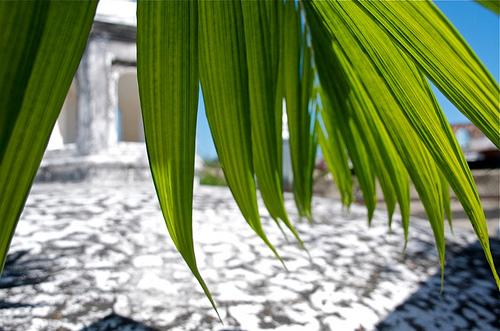 Green Gleen at Panza Verde
