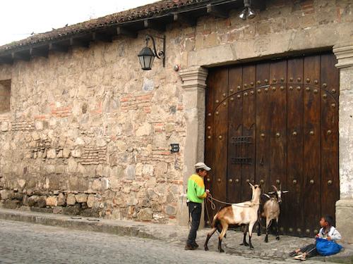 Milk Delivery in Antigua