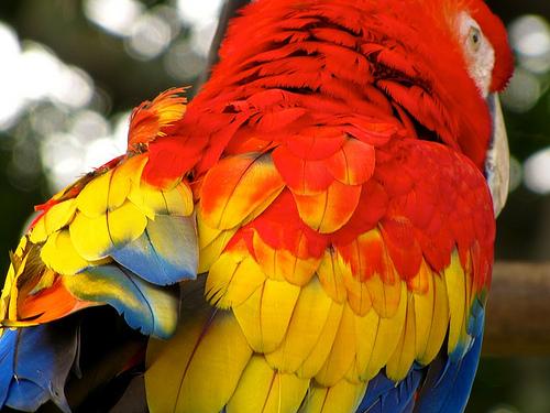 Guacamaya's Brilliant Colours