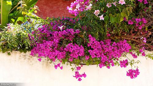 Typical Wall Garden