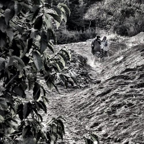 Coffee Harvesting Season is Underway