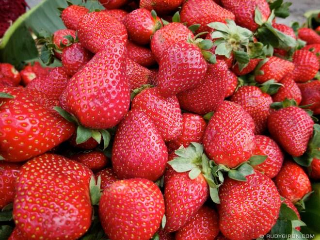Rudy Giron: AntiguaDailyPhoto.com &emdash; Strawberry Fields Forever