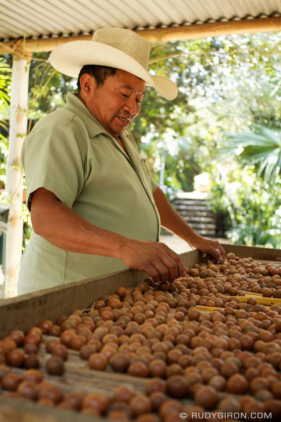Rudy Giron: AntiguaDailyPhoto.com &emdash; Macadamia Farm Tour Guide