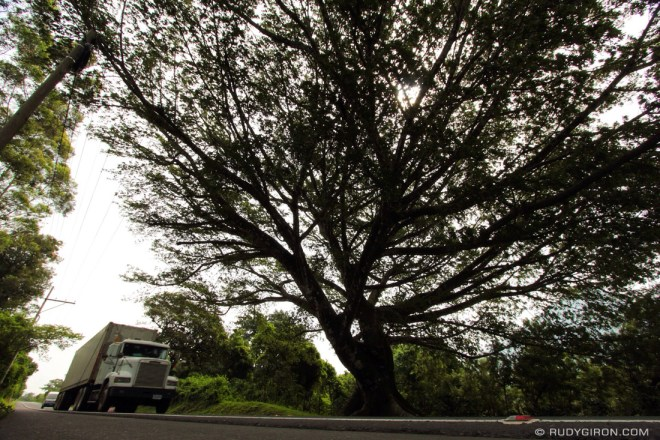 Rudy Giron: Antigua Guatemala &emdash; Ceiba Trees Are Portals to Xibalbá