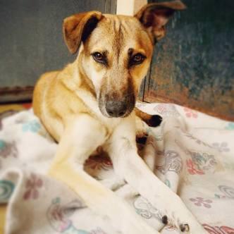 Social Service: Adopt Juanita!