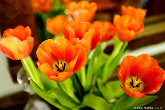 Rudy Giron: Flowers of Guatemala &emdash; Tulip Season in Antigua Guatemala
