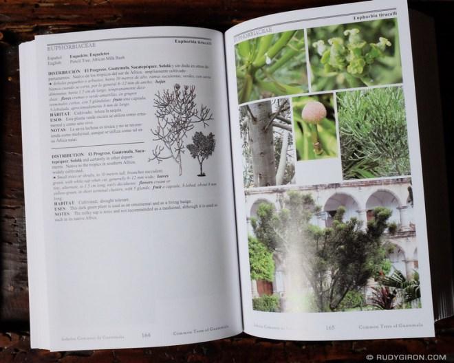 Rudy Giron: Antigua Guatemala &emdash; Common Trees of Guatemala - Inside