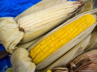 PHOTO STOCK: Yellow and White Corn on the Cob