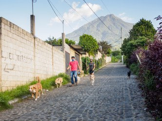 PHOTO STOCK: Masked couple walking their dogs in Antigua Guatemala