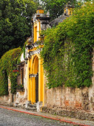 Creeper Plants Over Walls of Antigua Guatemala