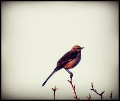 Homework: Who's a Mockingbird?