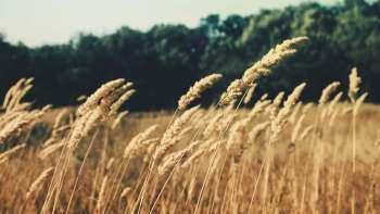 Permalink auf:Landluft & Atmosphäre