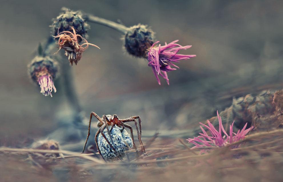 Καλώς ήλθατε στον κόσμο της αράχνης. (© Krasimir Matarov, Βουλγαρία)