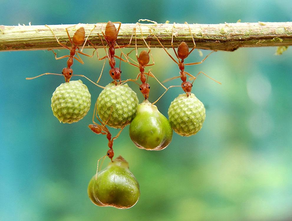 Μυρμήγκια κρατούν σπόρους.