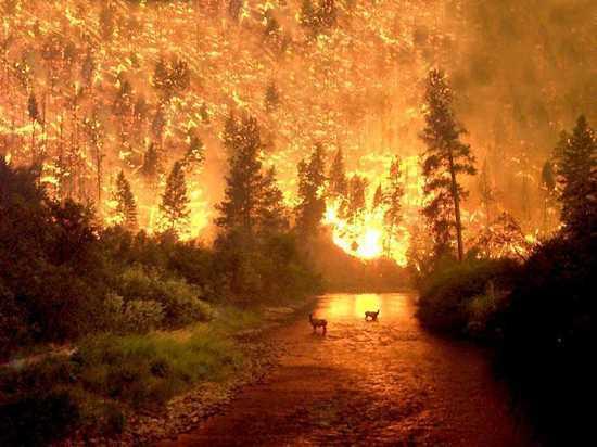 Η φωτιά στο  Εθνικό Δάσος Bitterroot