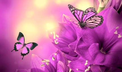 flowers-and-butterflies