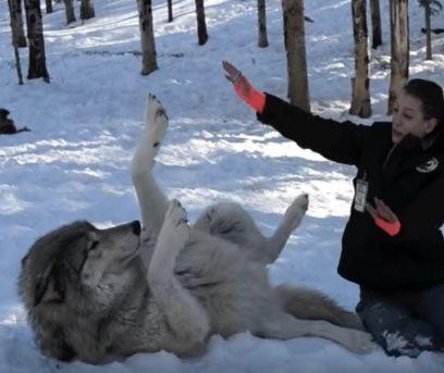 filia_woman-wolf