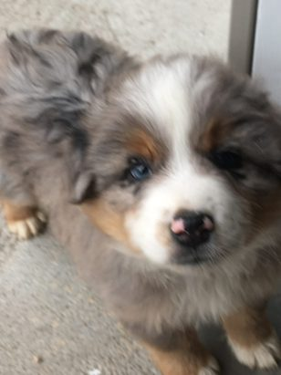 jerry-puppy