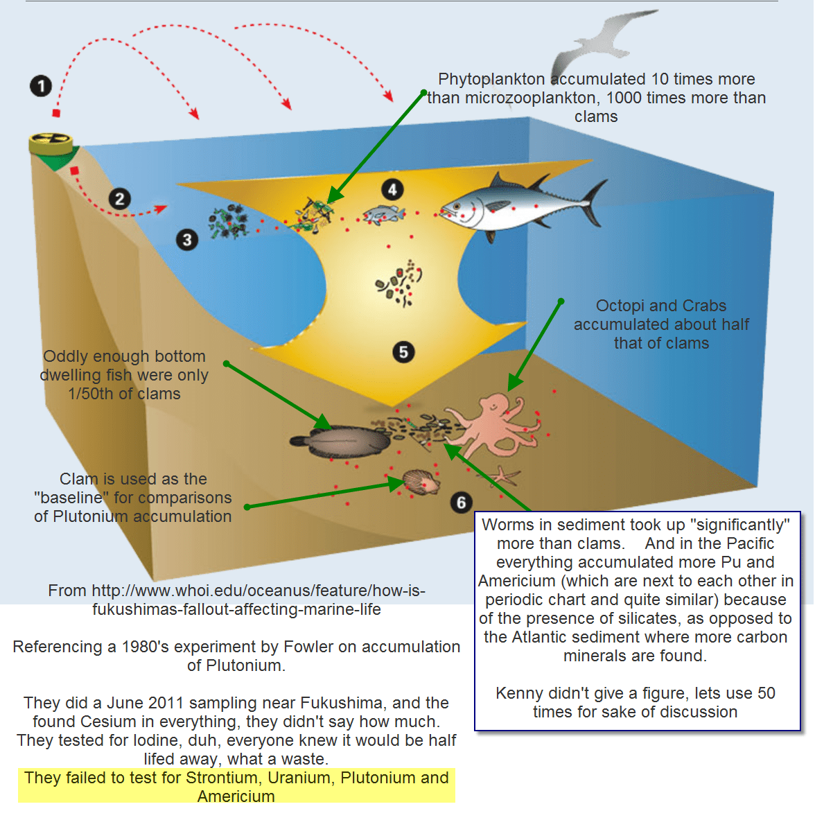 Radiation In The Ocean Food Chain An Assessment Of