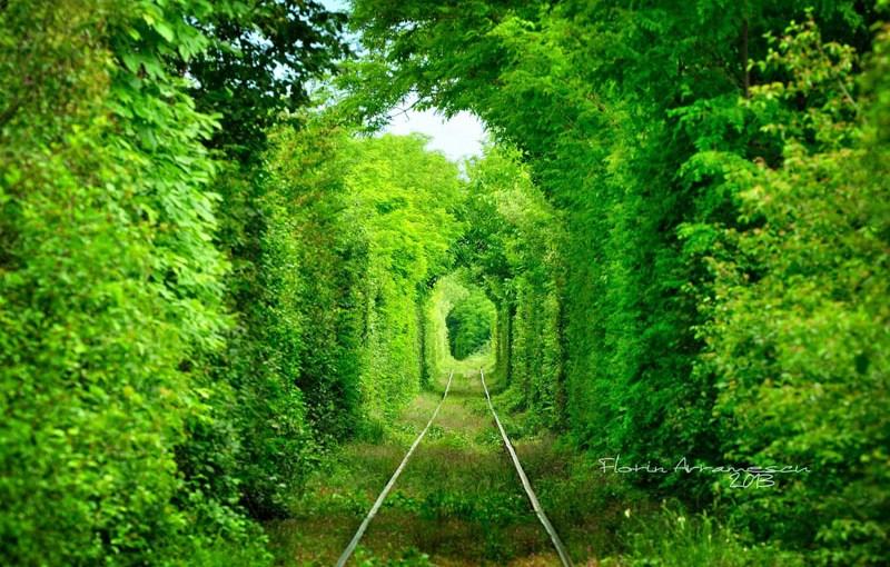 Tunelul verde din Glimboca