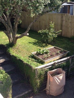 our original vegetable garden next to the lemon tree and under the pohutakawa