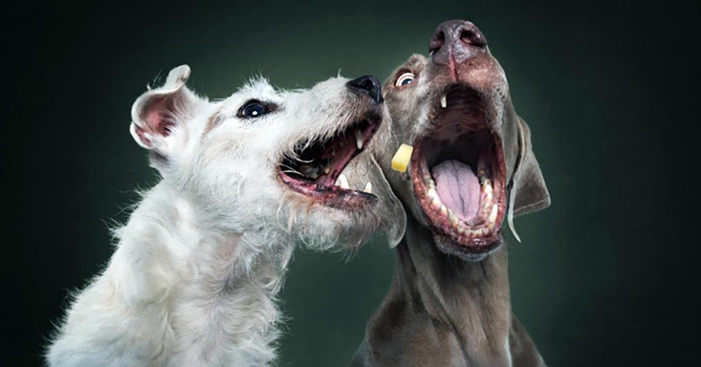 """Собаки сыграли в игру """"Поймай меня, если сможешь"""""""