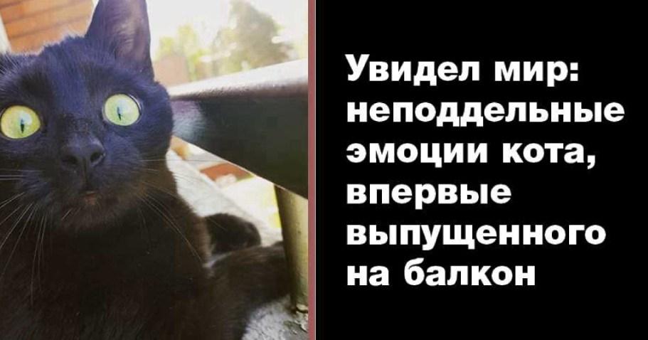 Кота впервые выпустили погулять на балкон: просто непередаваемые эмоции