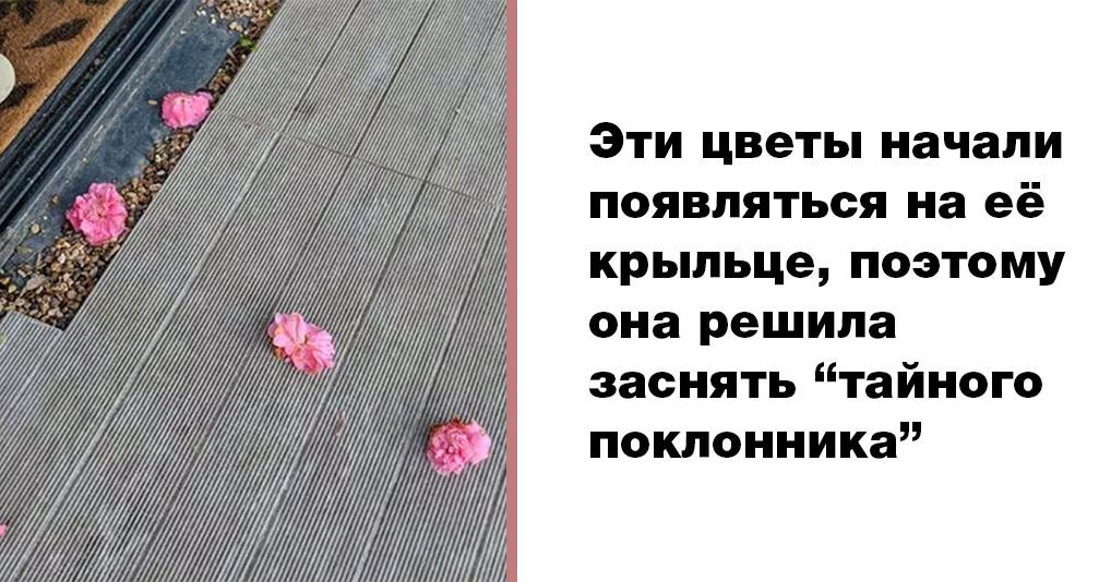 Неожиданный поклонник: женщина ежедневно находила цветы на крыльце