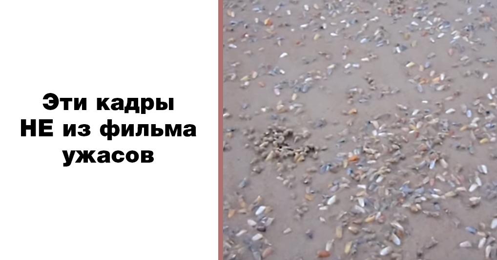 Они живут прямо под ногами у купальщиков: интригующее видео с моллюсками
