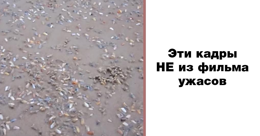Интригующее и пугающее видео с моллюсками, которые живут прямо под ногами у купальщиков