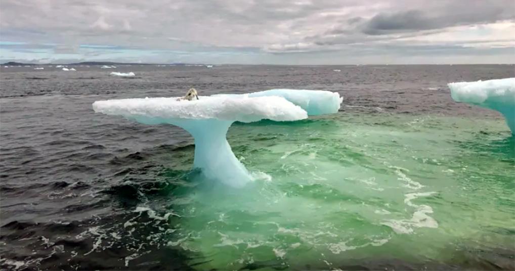 Песец оказался в ловушке на льдине и его уже пытались съесть чайки. Но помощь пришла откуда ее не ждали