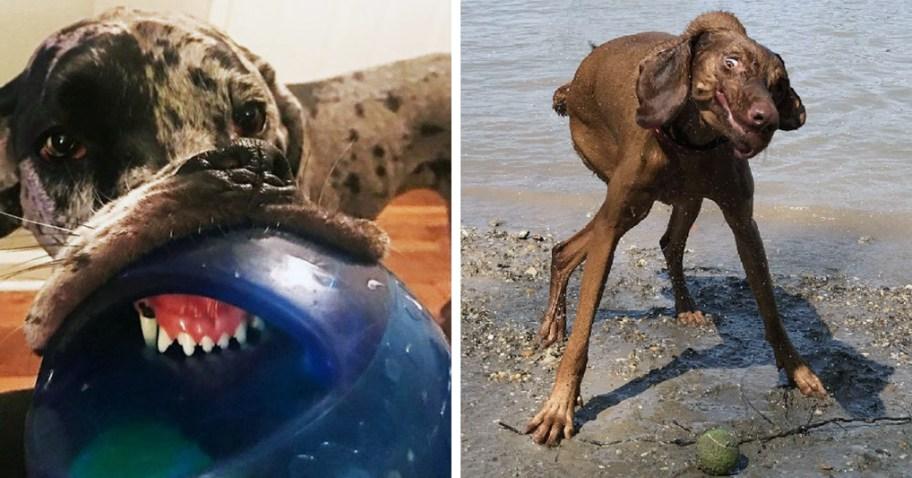 20 фото собак, при виде которых так и хочется сказать: э-э, они сломались?