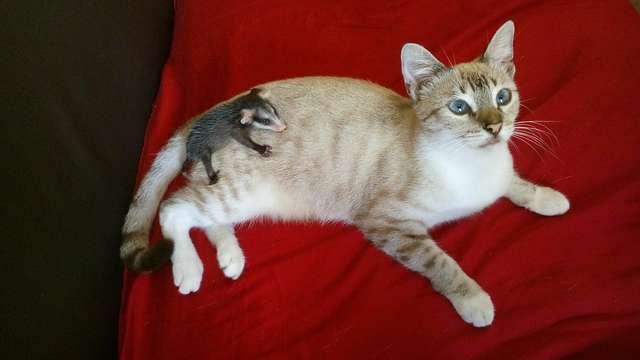 Кот подобрал на улице несчастного зверька и принес в дом