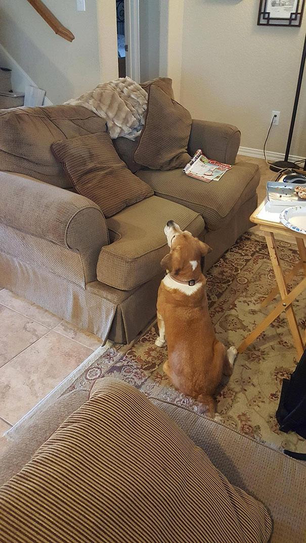 Собаки, готовые на все, чтобы уталить свой голод