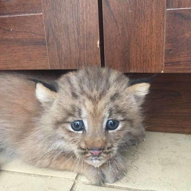 Парень спас найденного на улице котенка, но тот оказался с сюрпризом