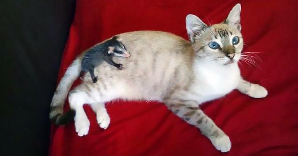 Заботливый кот подобрал на улице и принес в дом несчастного зверька