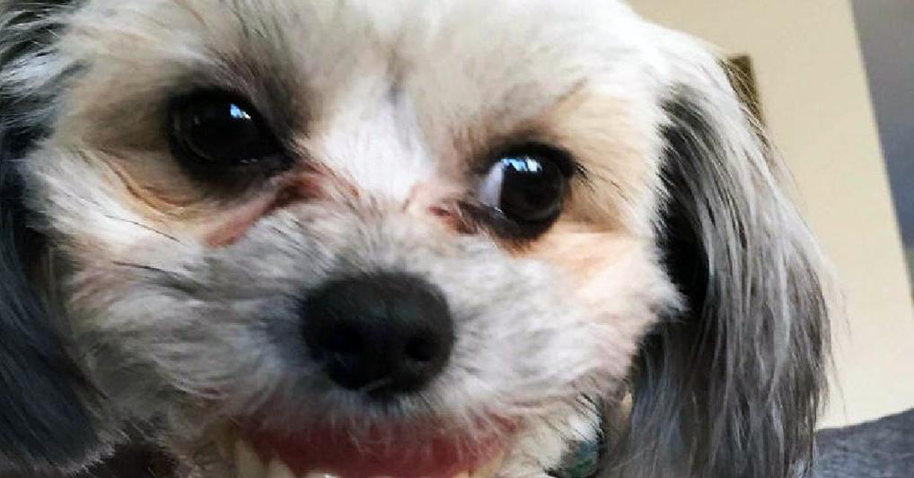 Собачка утащила вставную челюсть хозяина и перевоплотилась в чудного зверя