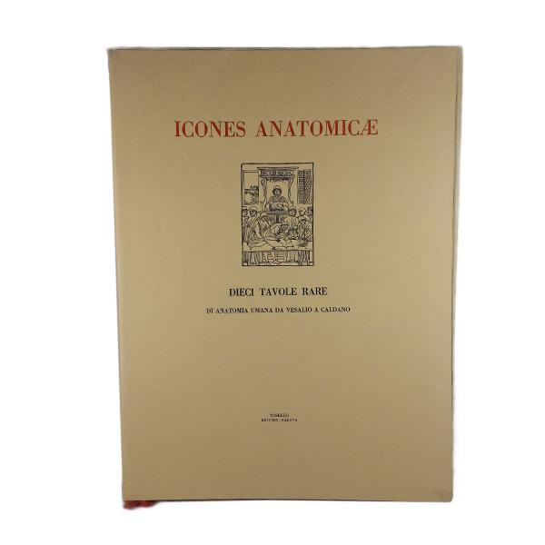 Icones Anatomicae – Dieci Tavole Rare Di Anatomia…