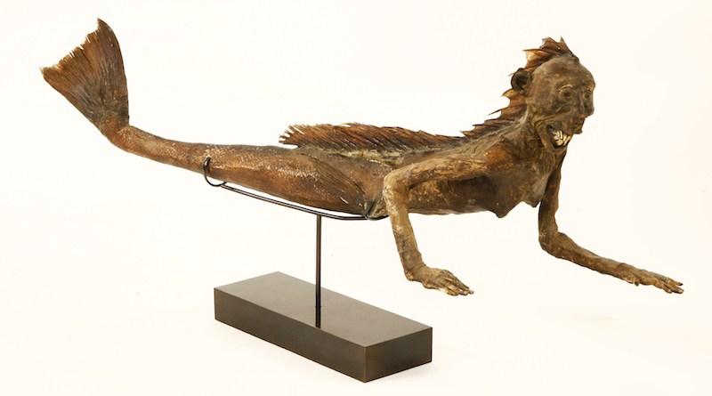The hoax Victorian taxidermy Feejee mermaid