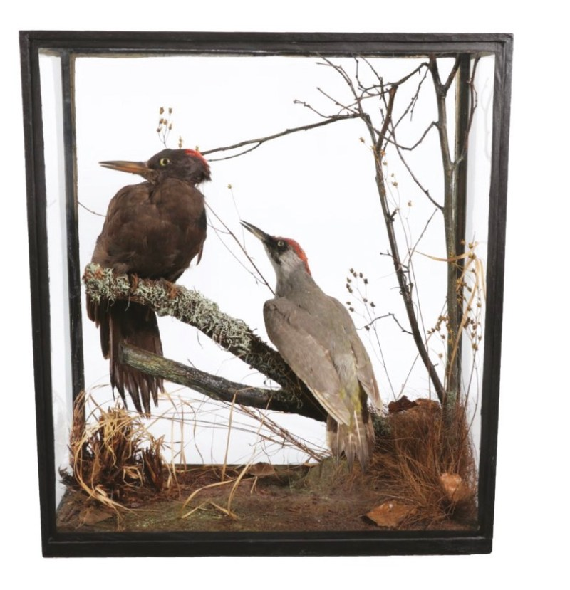 A cased woodpecker diorama, by Rowland Ward, etched to front glass 'Rowland Ward, 166 Piccadilly, London', sold for £200
