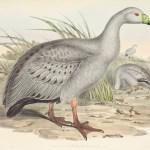 John Gould - Birds of Australia