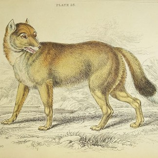 Naturalist Library - Dogs