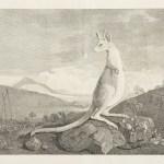 Australia-1st English Edition 1773, 1777, 1784