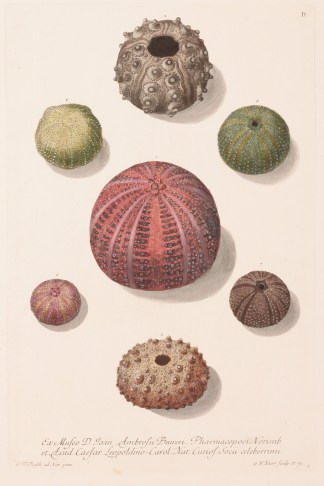KNORR - Cabinet of Curiosities