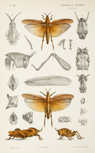 Insects - McCoy's Zoology