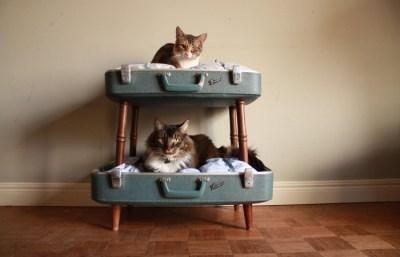 cat-bunk-beds-4-700x450