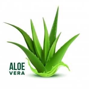 Top 5 des antirétroviraux naturels sans danger : Aloes