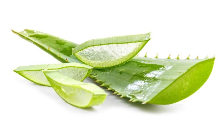 Utiliser l'aloe vera pour favoriser l'ovulation