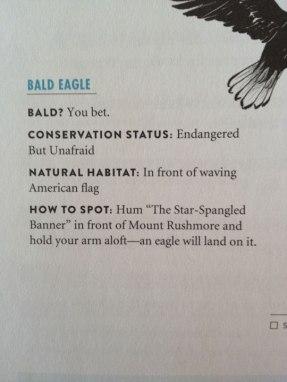 4th-July-bald-eagle